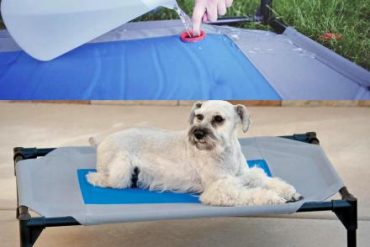 Best Outdoor Dog Lounger That Keep Your Dog Cool In The Summer Season